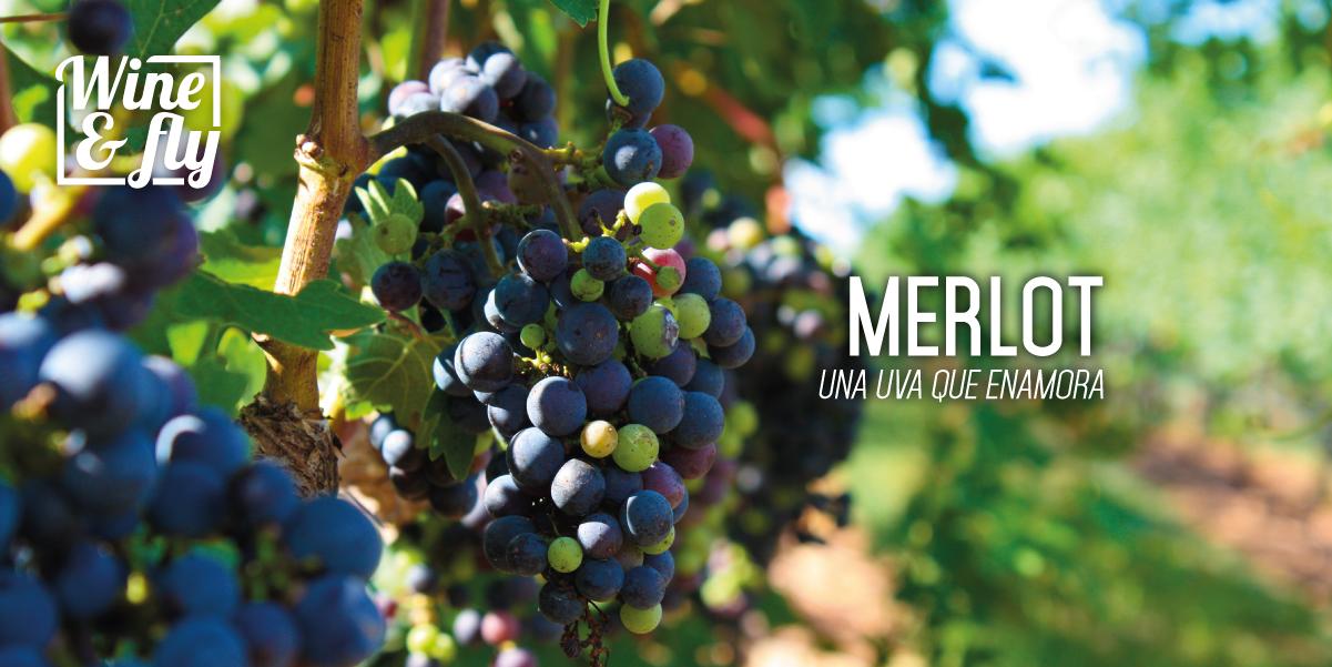 Wine&Fly_Francia-26